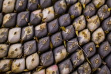 Closeup Of The Seeds In Sunflower. Abstract Pattern