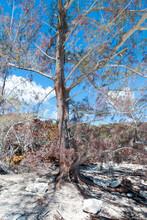 Half Moon Cay Uninhabited Caribbean Island Tree