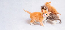 Three Small Funny Kittens, Two...
