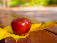 A Shiny Brown Chestnut Nut Lies On A Yellow Maple Leaf On A Bench. Sunny Warm Autumn Day. Blurred Background. Copy Space.
