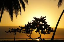 Dawn On A Tropical Island. Daw...