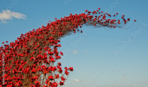 Poppy wave in rembrance of the fallen troops installed  at Fort Nelson, Portsmou Fotobehang