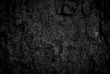Black Tree Bark Background Nat...