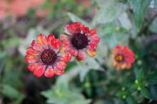 Flores Petalos
