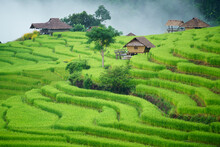 The Terraced Rice Paddy In Bon...