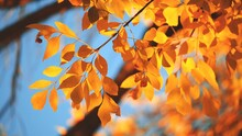 Yellow, Red And Orange Tree Leaves Over Blue Sky Background. Shallow DOF.