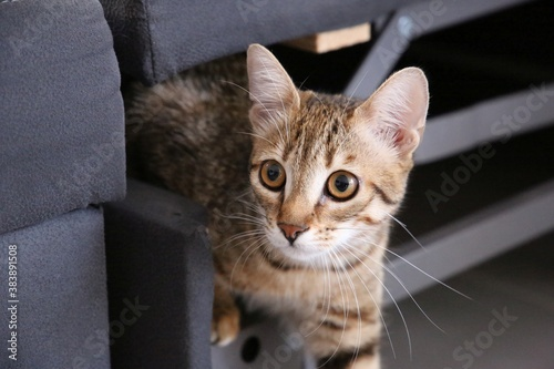 Fototapeta cat on the window obraz