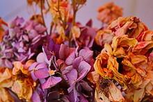 La Belleza De Las Flores Muertas