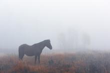 Brown Horse In Foggy Meadow In...