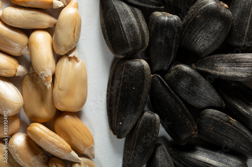 Fototapeta Sunflower seeds on a white background, unpeeled and peeled. Without a shell. Macro. obraz