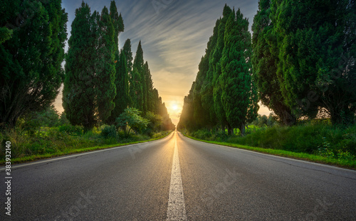 Photo Bolgheri famous cypresses tree straight boulevard