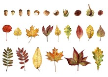 Leaves Of Various Trees In Aut...