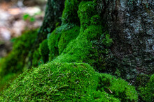 A Moss Covered Tree Trunk In T...