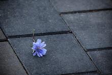 Light Blue Flower Lying On Gra...
