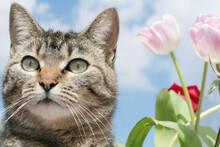 Gray Tabby Cat In Garden