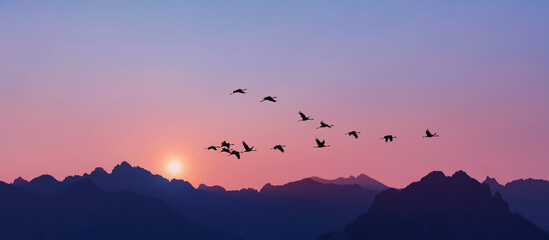 Sandhill Cranes flying across pink clear sky