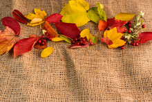Autumn Background, Colorful Leaves On A Jute Potato Sack