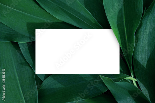 Fototapeta Business card on natural leaves background. Green leaves. Modern mock up for business. Nature shop card obraz
