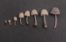 Arranged Mushrooms On Black Ba...
