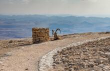 Male Of Wild Goat (Carpa Aegagrus) In Stone Desert Of The Negev, Israel