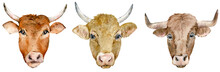 Watercolor Set Of Horned Cow A...