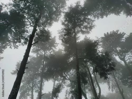 Fotografía forest shrouded in mist