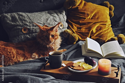 Cozy home with cup of tea with steam, blanket, book and cat. Hygge home interior