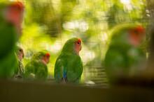Oiseau Trropical Vert Exotique