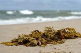 Fototapeta Fototapety z morzem do Twojej sypialni - Brunatnice