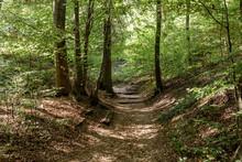 Hiking Trail Through The Thick...