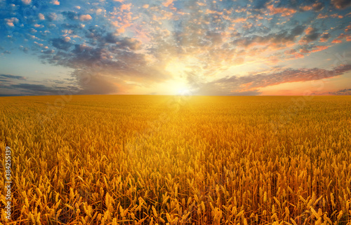Wheat field and crimson sky at sunset Canvas Print