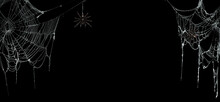 Real Creepy Spider Webs On Black Banner With Tarantulas Hanging From The Webs