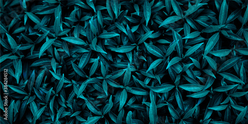 Obraz gren leaf fresh small background. Soft focus - fototapety do salonu