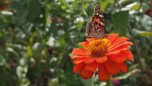 蝶が止まった花