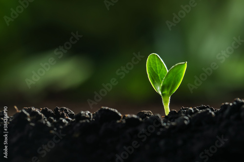 Fotografering Young vegetable seedling growing in soil outdoors, space for text
