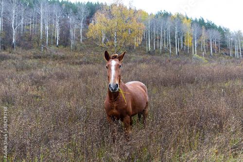 Fototapeta beautiful wild young horse