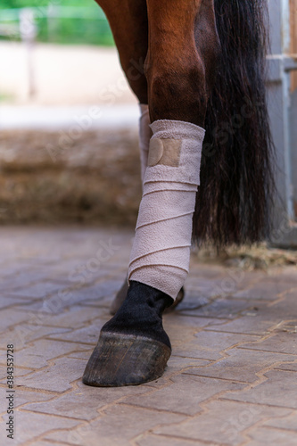 Obraz na plátne Close-up of horse legs with white bandages in a stable