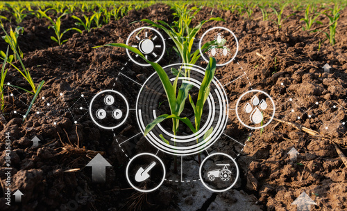 Photo Maize seedling in cultivated agricultural field with graphic concepts modern agr