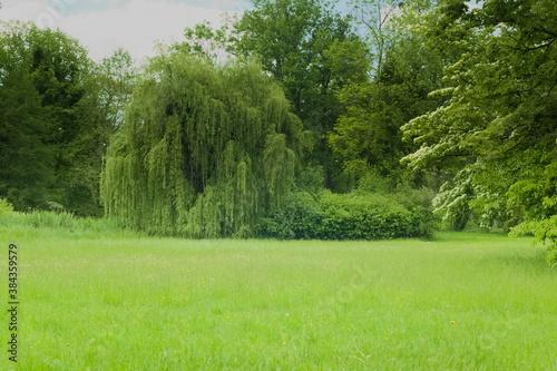 Fototapeta premium Pejzaż łąka i drzewa latem