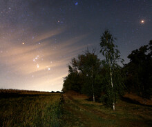 Milky Way Above Trees. Look Up Stars