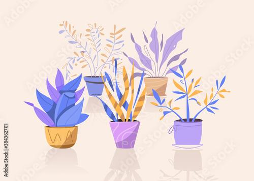 Cuadros en Lienzo Potting trees, flowerpots hanging, plants in pots set isolated objects