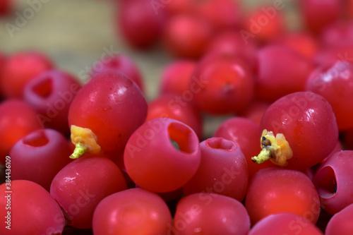 Małe, czerwone owoce krzewu na różnych tłach.