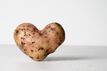 Abnormal Potato In Shape Of Heart On White Concrete Background. Concept Love Organic Natural Homegrown Ugly Vegetables. Close Up. Copy Space.