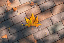 Yellow Autumn Dry Maple Leaf On Paving Stones With Sun Shadows.