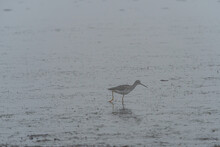 One Small Sandpiper Searching ...