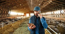 Caucasian Man Shepherd Walking In Shed With Cattle Animals And Talking On Mobile Phone. Male Farmer In Stable With Sheep Speaking On Cellphone. Worker Stepping In Barn With Tablet Device.