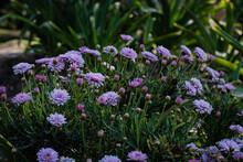 Flores En Unitario De Colores Vivos En Primavera En Patio De Campo Cordoba Argentina