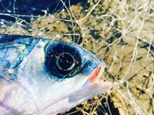 Close Up Of A Fish