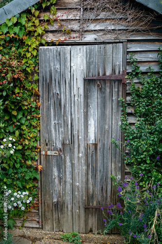 Old wooden garden shed door covered with ivy Fototapet