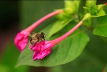 Striped Bee Sitting On Purple Flower